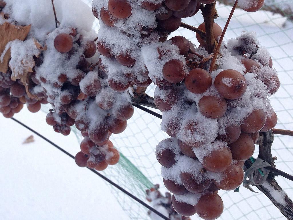 ice_wine