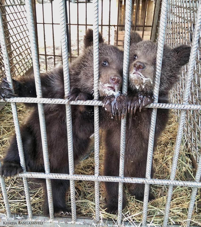 bear_cubs_tbilisi